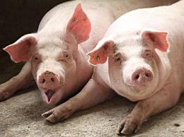 打听一下沛县地区有没有合适的养殖场,或者和猪沾边的生意